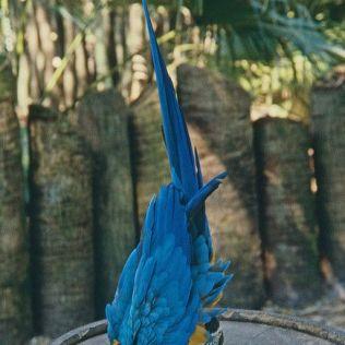 Parrot #Yoga