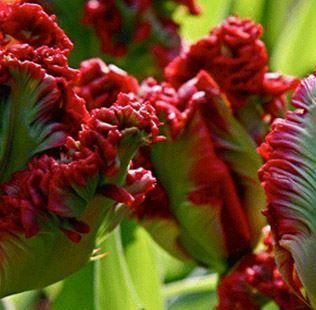 Сравнивая ажиотаж вокруг биткоина с тюльпанной лихорадкой XVII века один известный учёный-экономист заметил, что тюльпаны ценятся по-прежнему – есть очень дорогие тюльпаны.